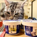 アルコール度数約4%の日本酒入りアイス! ねこのマャーちゃんに「SAKEICE」のPR案件が入ってきました!