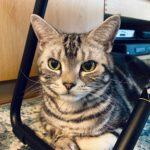 賢い猫かどうかがわかる? マャーちゃんに「#猫壁チャレンジ」をやらせてみました