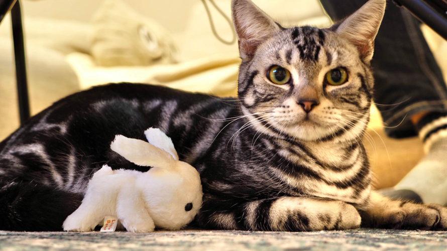 ネコを飼い始めました。名前はマャーです。よろしくね!