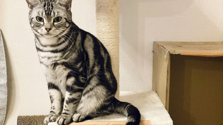 飼い猫が2階のベランダから外に脱走した行動の記録と反省したことを書き残しておく